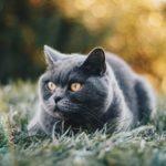 ポイント猫